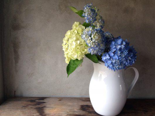 なつめいろ(natsumelife)でのLife with flowers。6月は紫陽花の花を紹介します。
