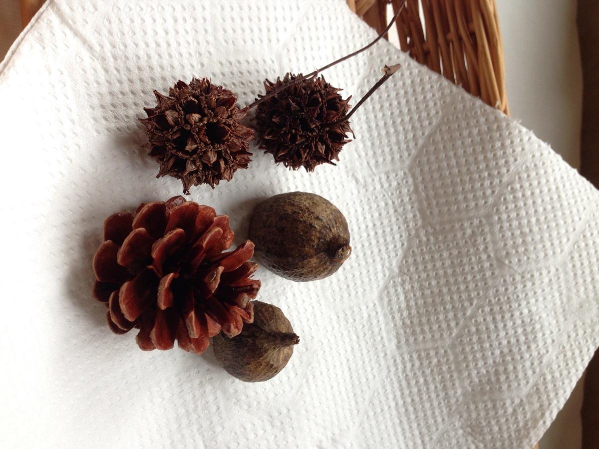 乾燥させている木の実