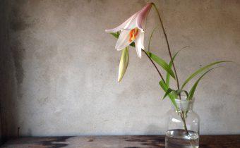 女神ヘラの花